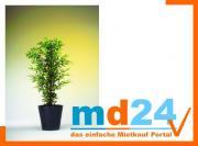 bambus_5fach_naturstamm__180cm.jpg