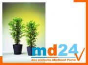 bambus_5fach_naturstamm__210cm.jpg