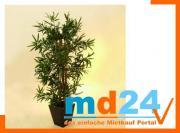 bambus_multistamm_mit_zementtopf__150cm.jpg