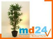 bambus_multistamm_mit_zementtopf__180cm.jpg