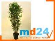 bambus_multistamm_mit_zementtopf__240cm.jpg