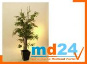 bambus_dunkelstammzementto_1174bl182cm.jpg