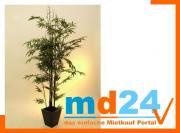 bambus_dunkelstammzementto_1735bl210cm.jpg