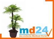 areca_palme_m_baststammzementtopf_120cm.jpg