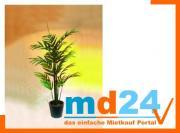 areca_palme_mgrwedeln_m_zementtopf230cm.jpg