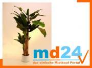 bananenbaum_33blatt1staude3stamm_250cm.jpg