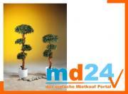 bonsai_palmenbaum_mit_4800_blaettern_120cm.jpg