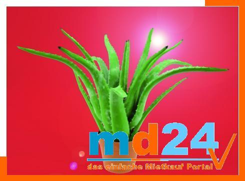 Aloe Vera Pflanze 16 Blatt           63cm